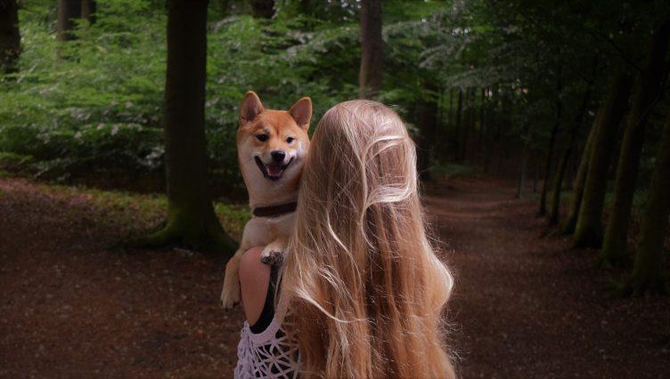 hondengedragsbegeleiding